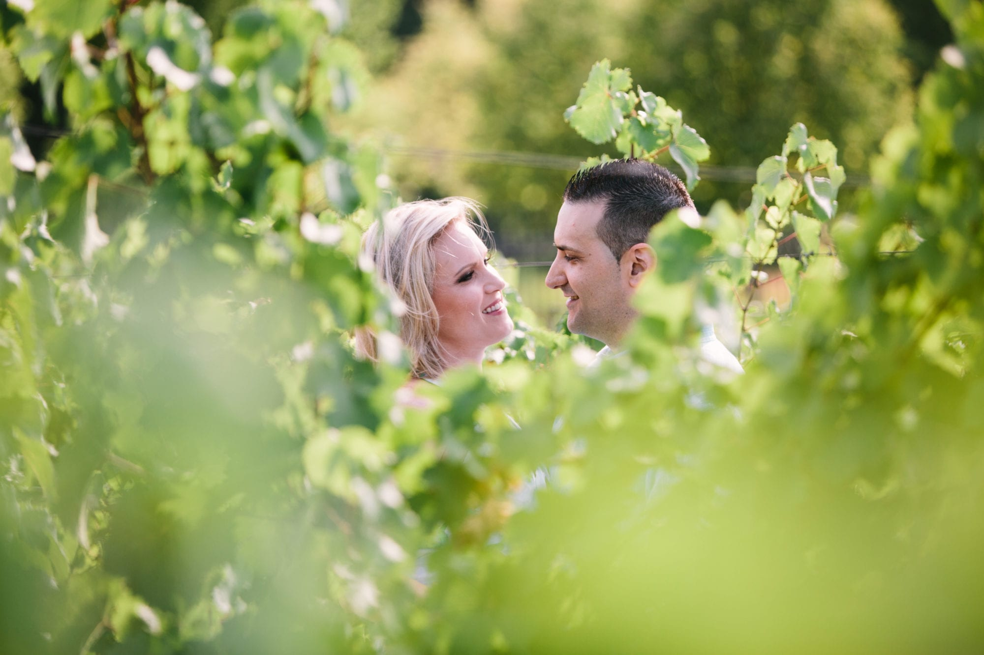 Wine Leaves Tawse Winery Engagement Zsuzsi Pal Photography
