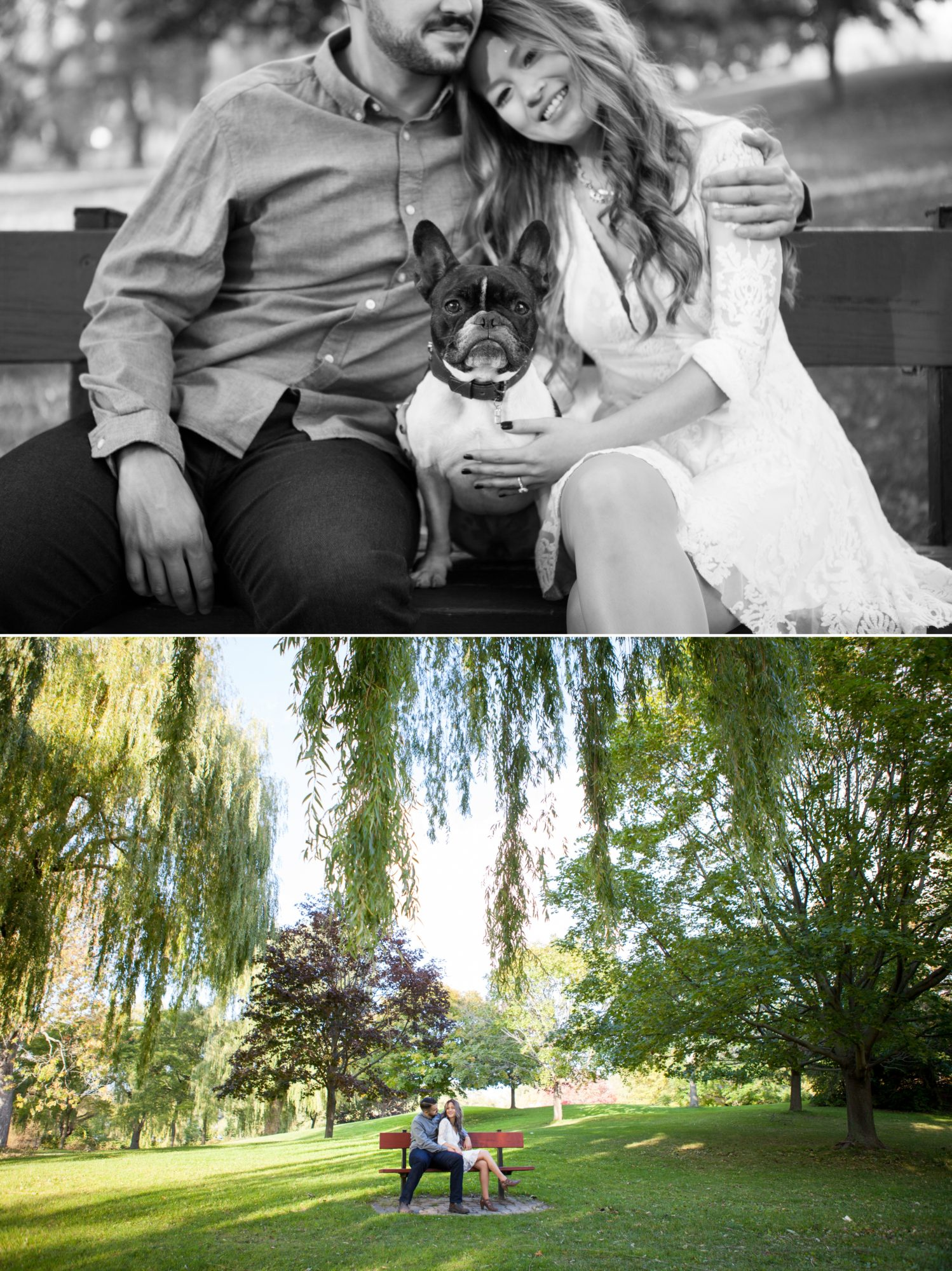 Frenchie Toronto Island Engagement Shoot Zsuzsi Pal Photography Dog