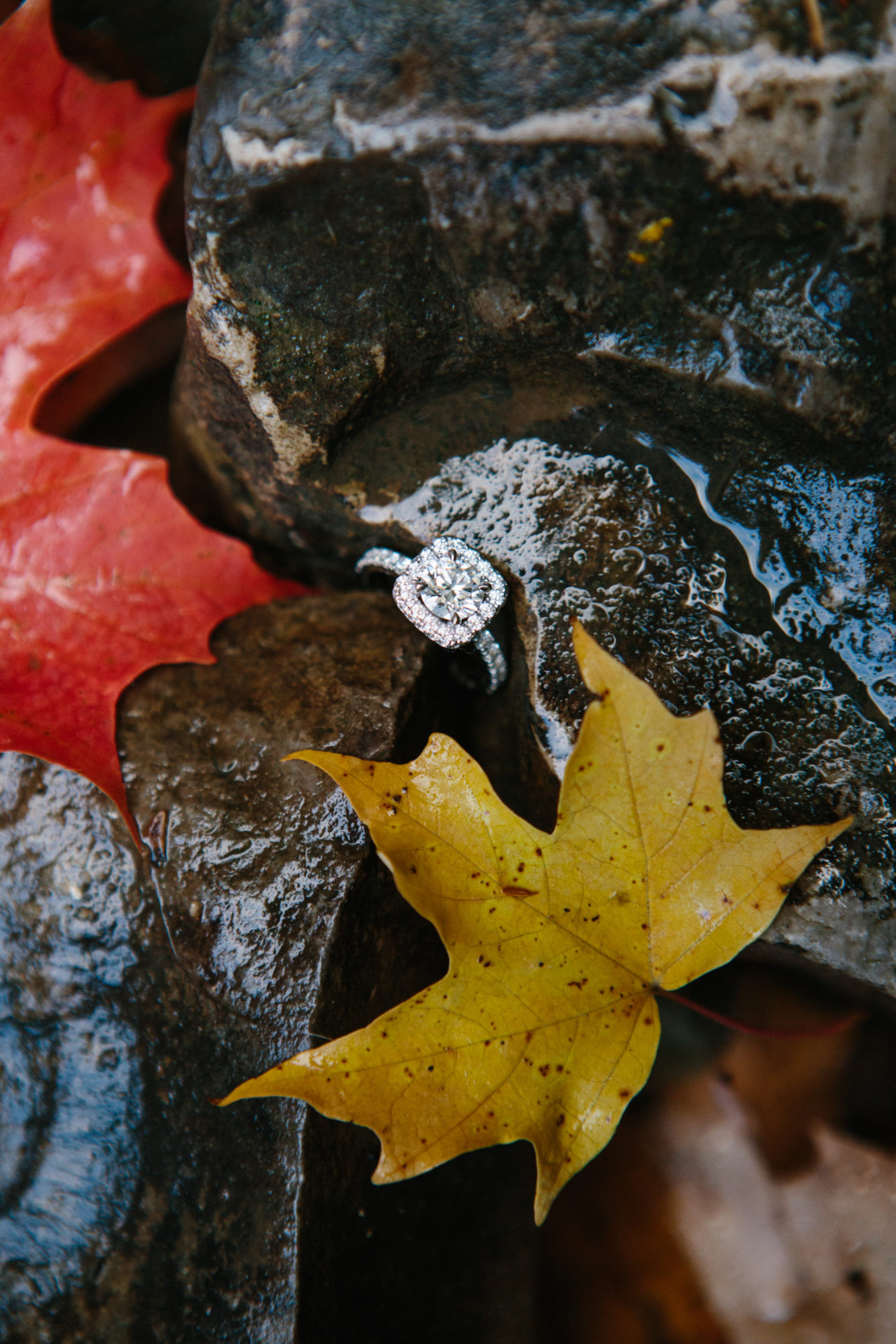 Fall Autumn Ring Shoot Engagement Shoot Tiffany Falls Waterfall Zsuzsi Pal Photography