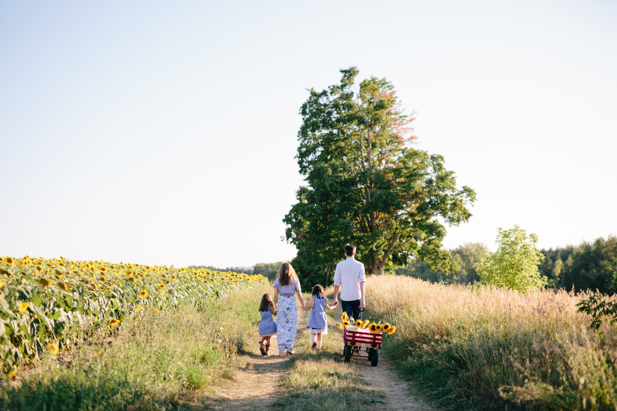 Family Shoot Sunflower Field Toronto Wedding Zsuzsi Pal Photography