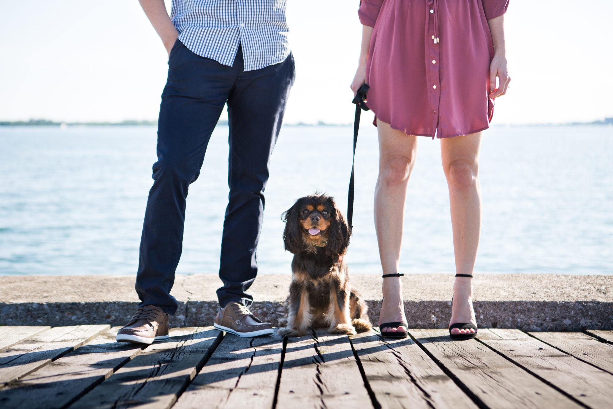Polson Pier Engagement Dog Toronto Wedding Zsuzsi Pal Photography