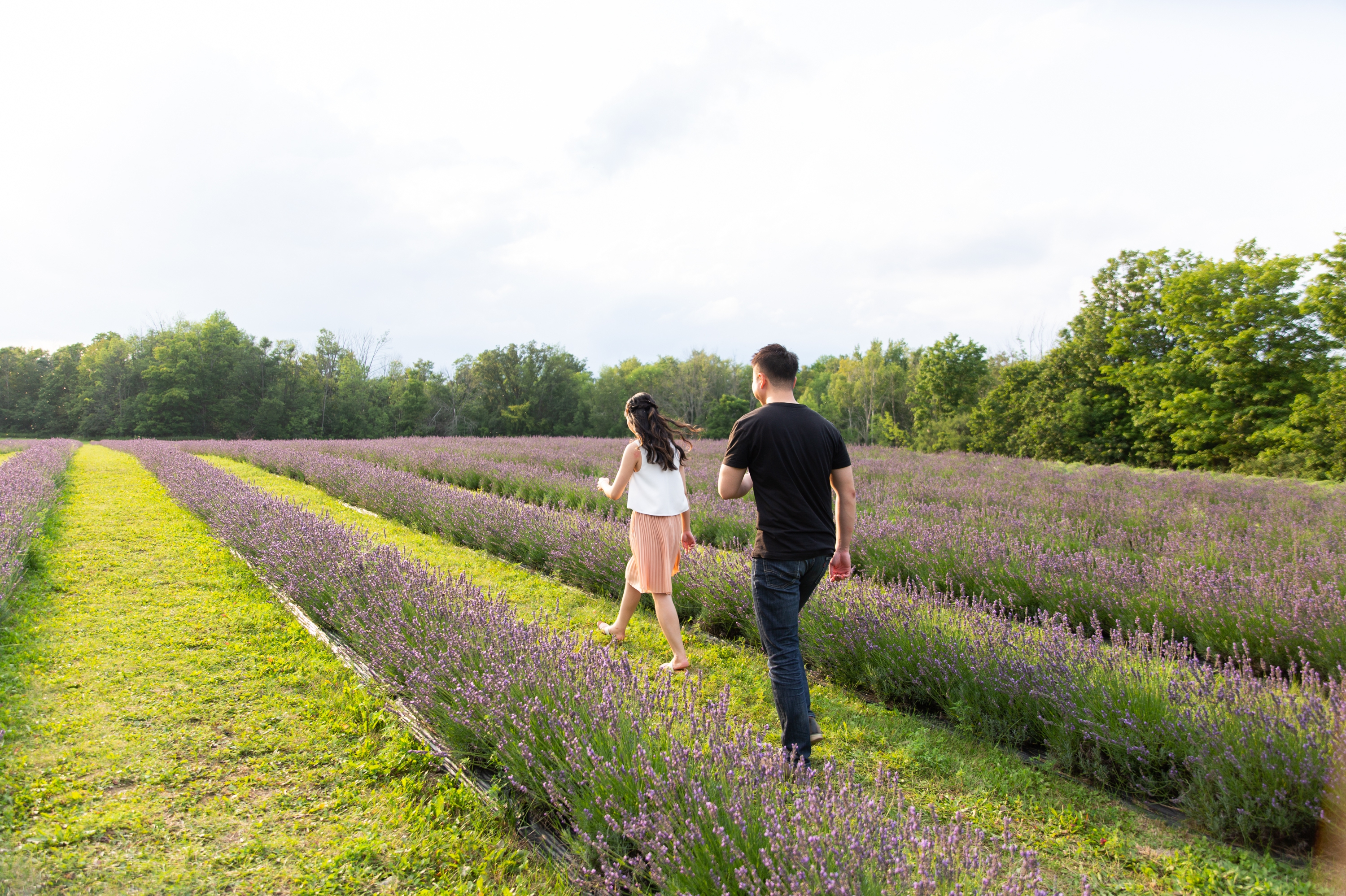 Sunset Engagement Shoot Lavender Farm Terre Bleu Milton Zsuzsi Pal Photography